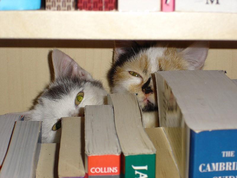hidingcats24