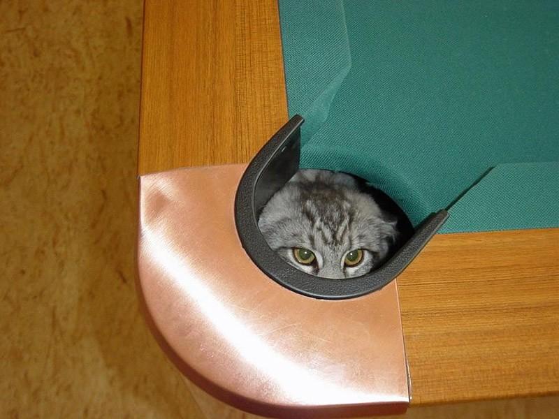 hidingcats25