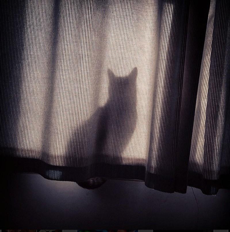 hidingcats28