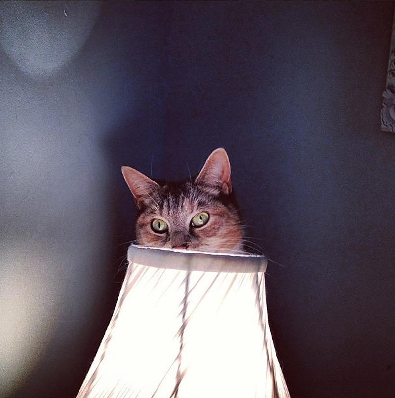 hidingcats29