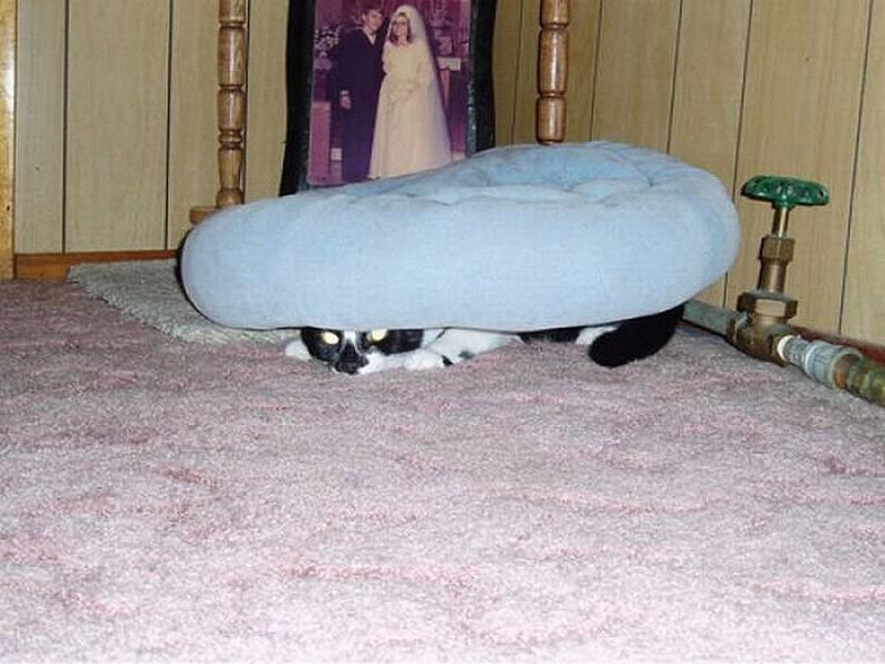 hidingcats31