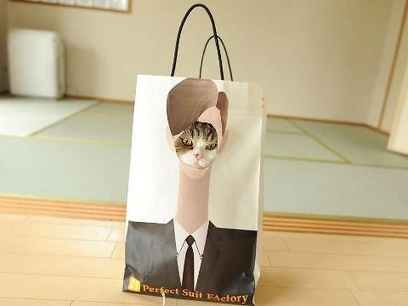 hidingcats33