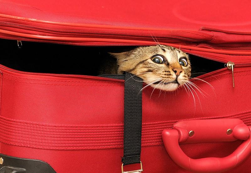 hidingcats32-1