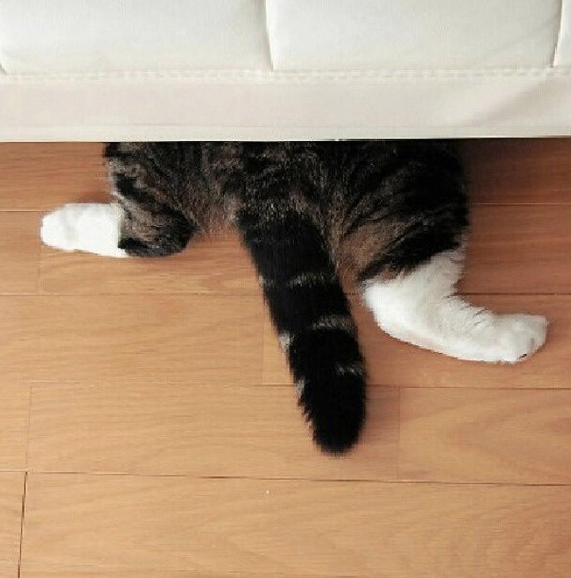 hidingcats34