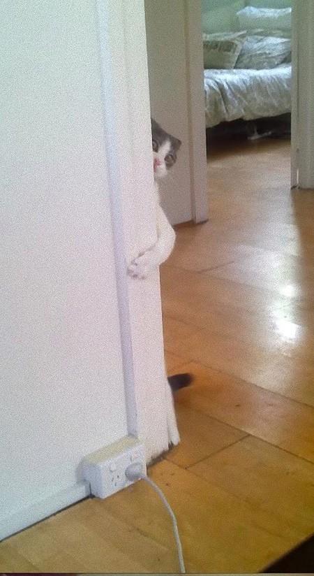 hidingcats37