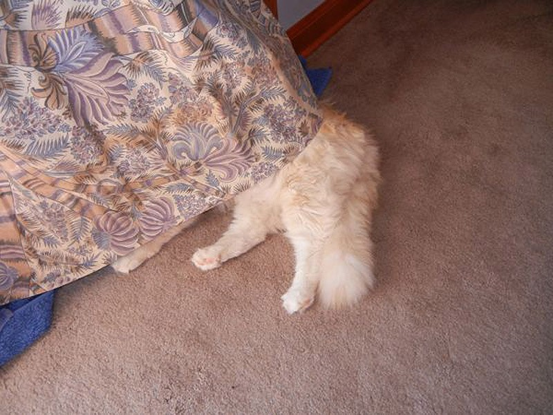 hidingcats38