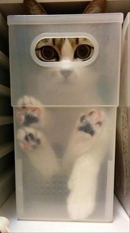 hidingcats40