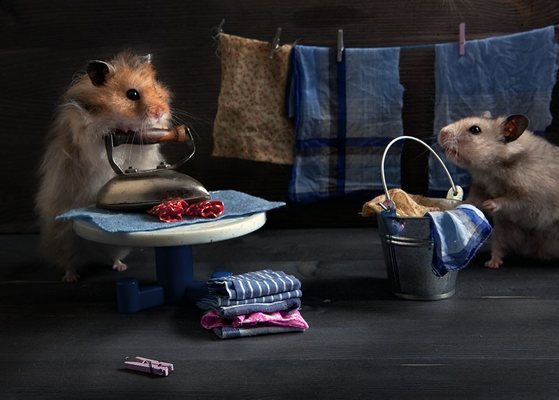 hamsters05