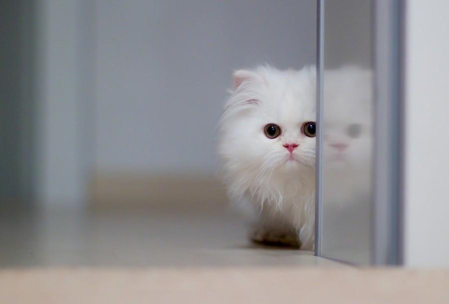 cats03