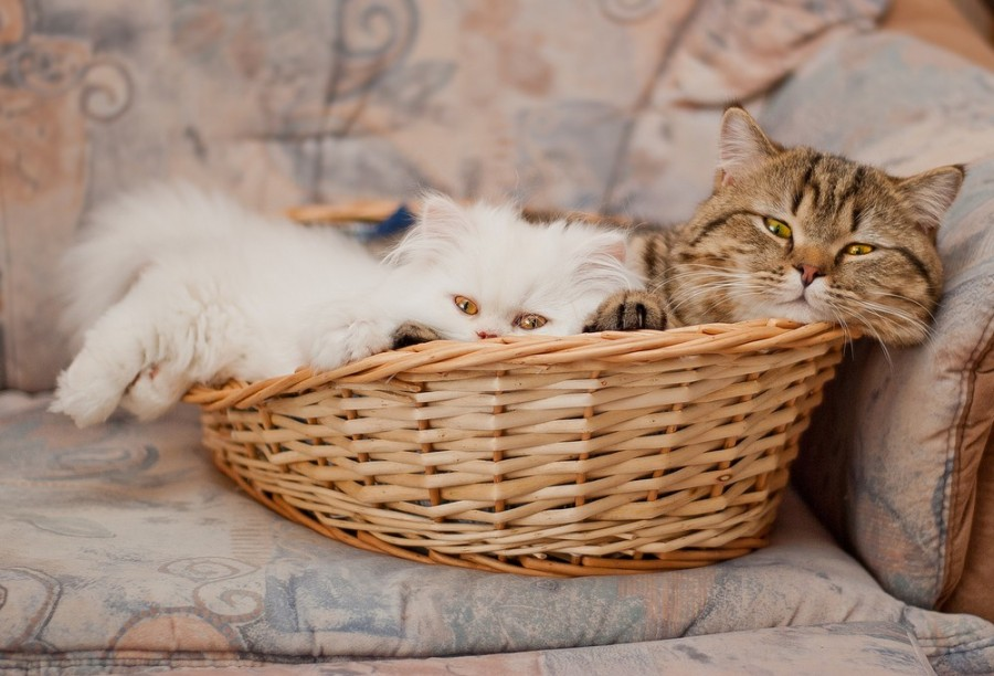 cats14