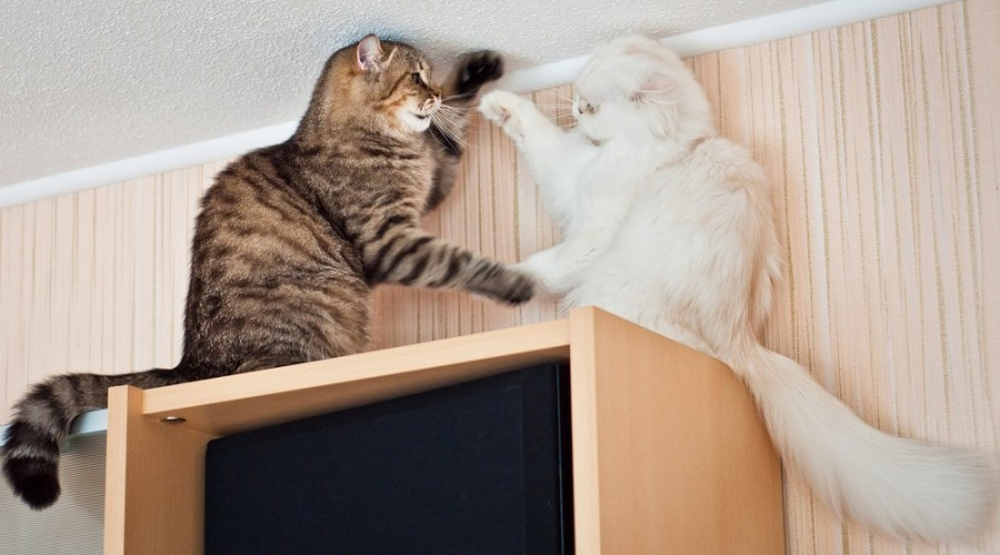 cats17
