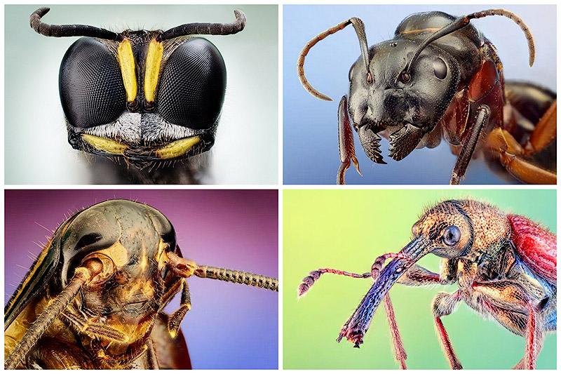 Удивительное рядом. Портреты насекомых