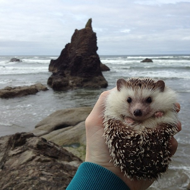 hedgehog-017-06162013