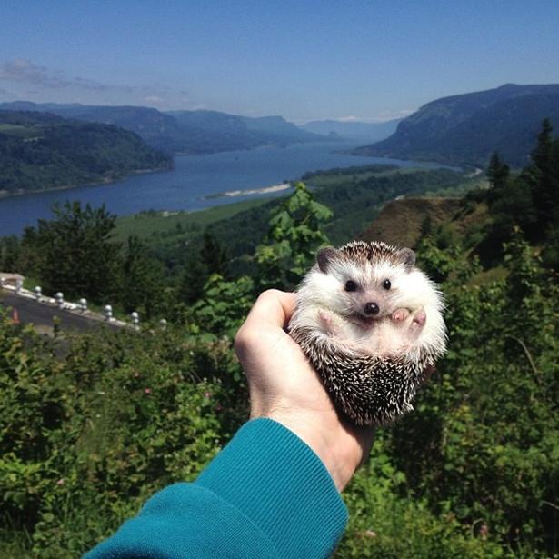 hedgehog-018-06162013