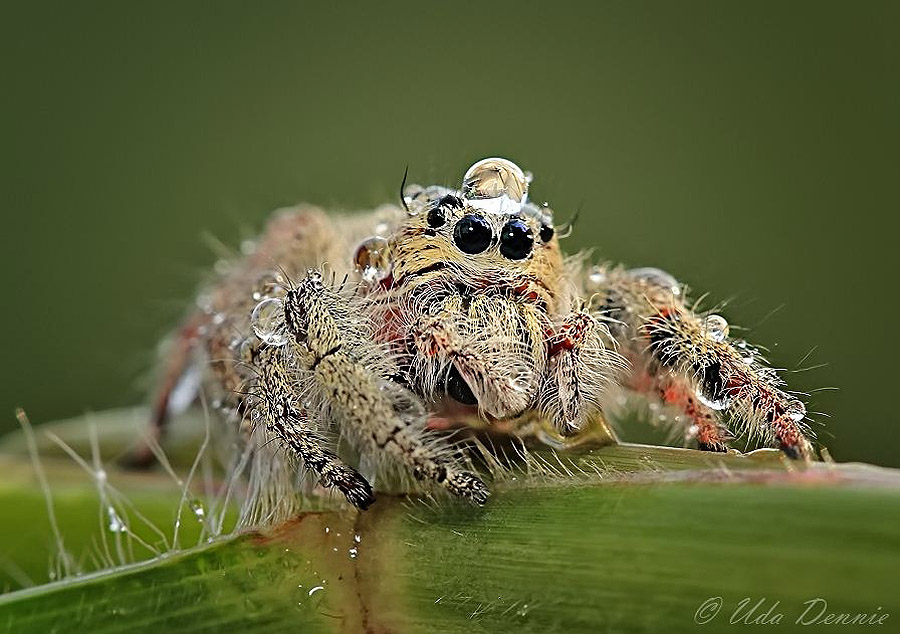 spiders04