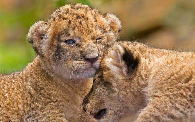 babyleopard07