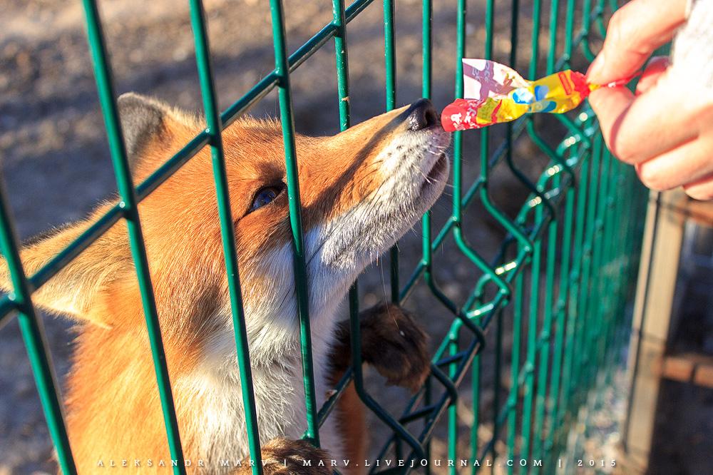 Животная несправедливость