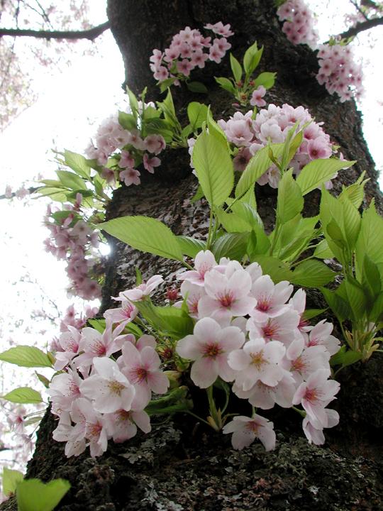 bloomin-trunk3088