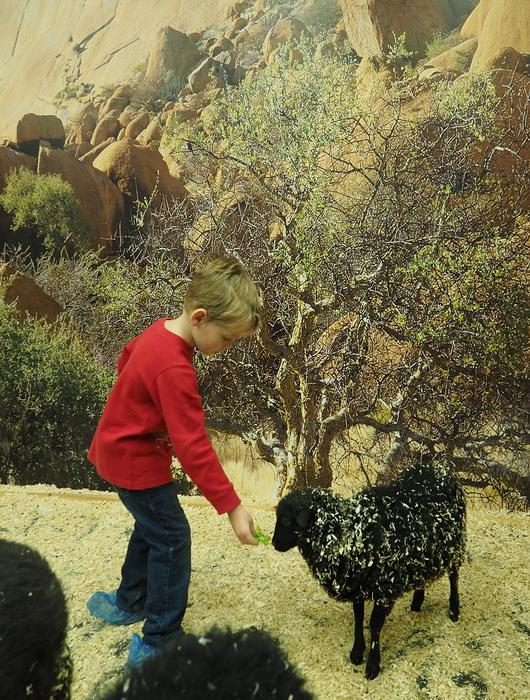 3D с овечкой.jpg