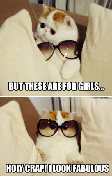 cat-sunglasses