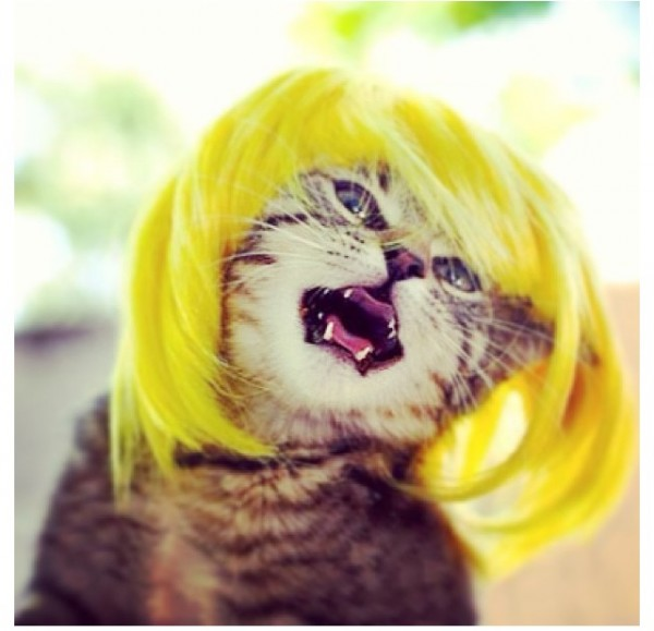 CARTOON CAT WIG