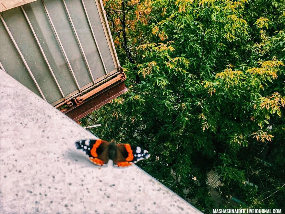 Потепление, бабочки с серьезным названием и кошка