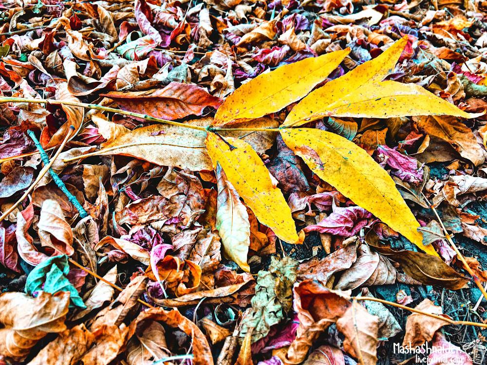 Как подготовиться к осени