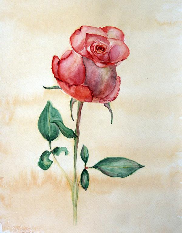 Розы красками рисунок