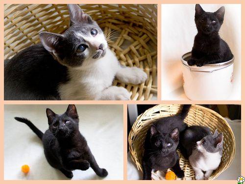 как определить слепоту кошки