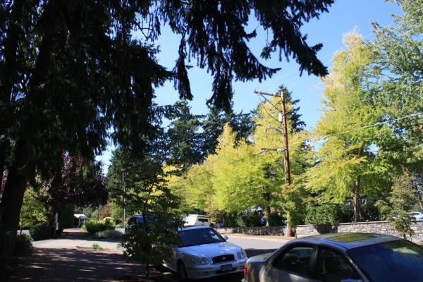 Portland 20 Lake Oswego 4