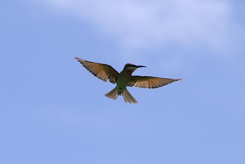 И здесь тоже не знаю, но красивая птица. Вообще, фауна и флора в тропиках, конечно, не в пример богаче европейской.