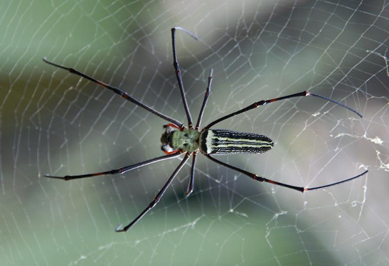 И с насекомыми на Цейлоне тоже хорошо. В изобилии :).
