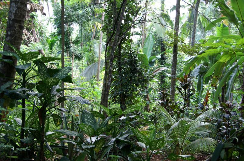 Однако, джунгли!