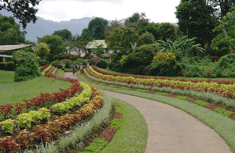 Ботанический сад в Канди. Вот, честно, всем садам сад. И климат способствует, и разнообразие видов, и уход образцовый.