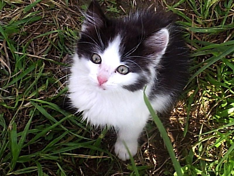 По-моему, его звали Кетчуп. Аэродромный котёнок.