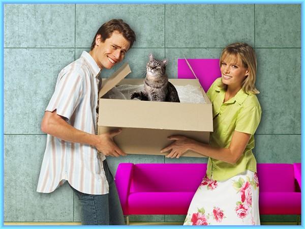 О мистической власти коробок над людьми и кошками