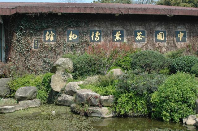 институт Чая, Хангчжоу, путешестиве с Мастером Чая