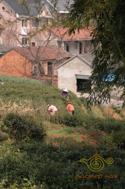 Longwu workers.