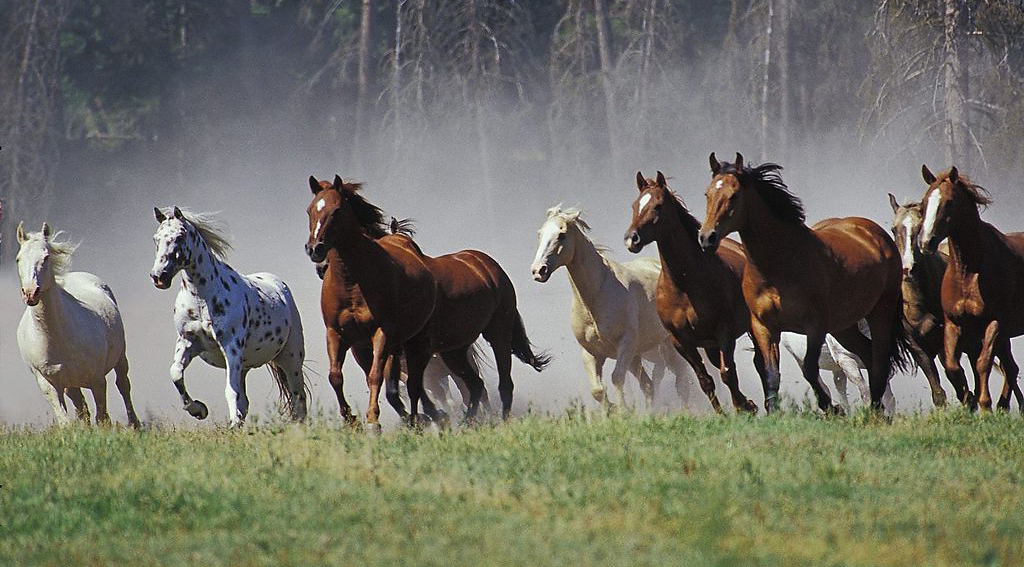 17 лошадей