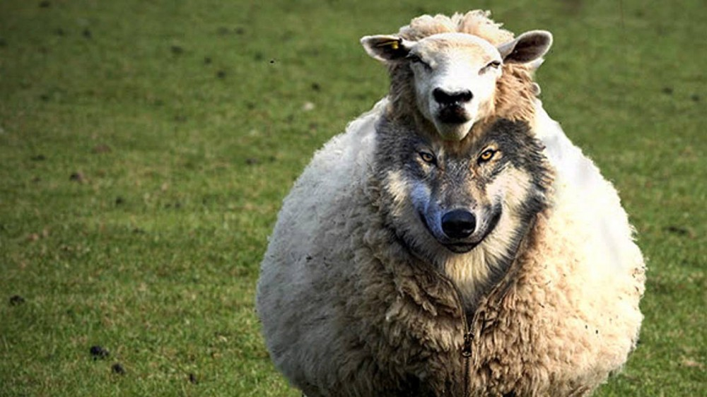 Наставник или волк в овечьей шкуре?