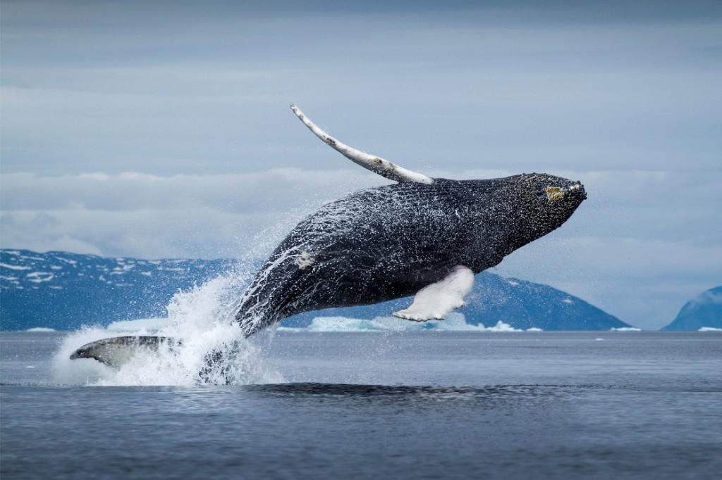 Как спят киты?