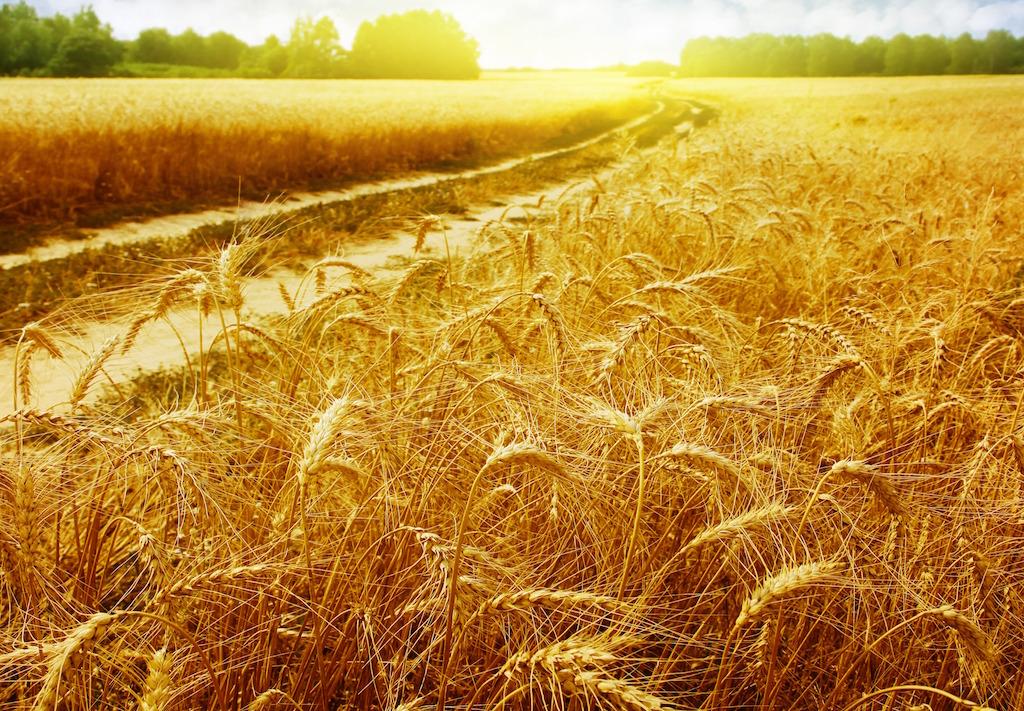 Страна зерноколонка