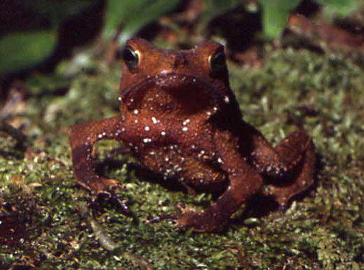 Лягушки-некрофилы