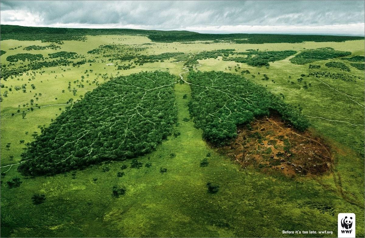 Правда ли, что леса - это легкие планеты?