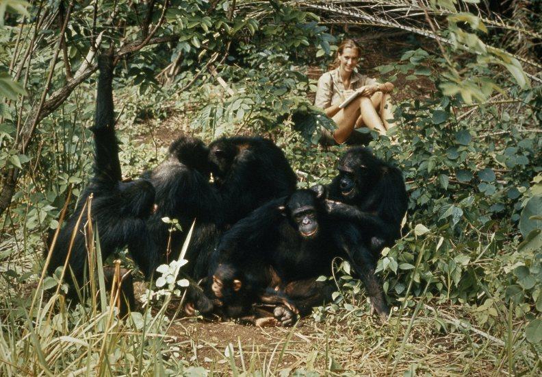 Почему люди постоянно воюют и сколько это будет продолжаться шимпанзе, группы, человека, воюют, только, такие, просто, человек, который, конечно, войны, Гудолл, можно, всегда, большой, самца, группе, агрессию, Касакелы, обезьяны