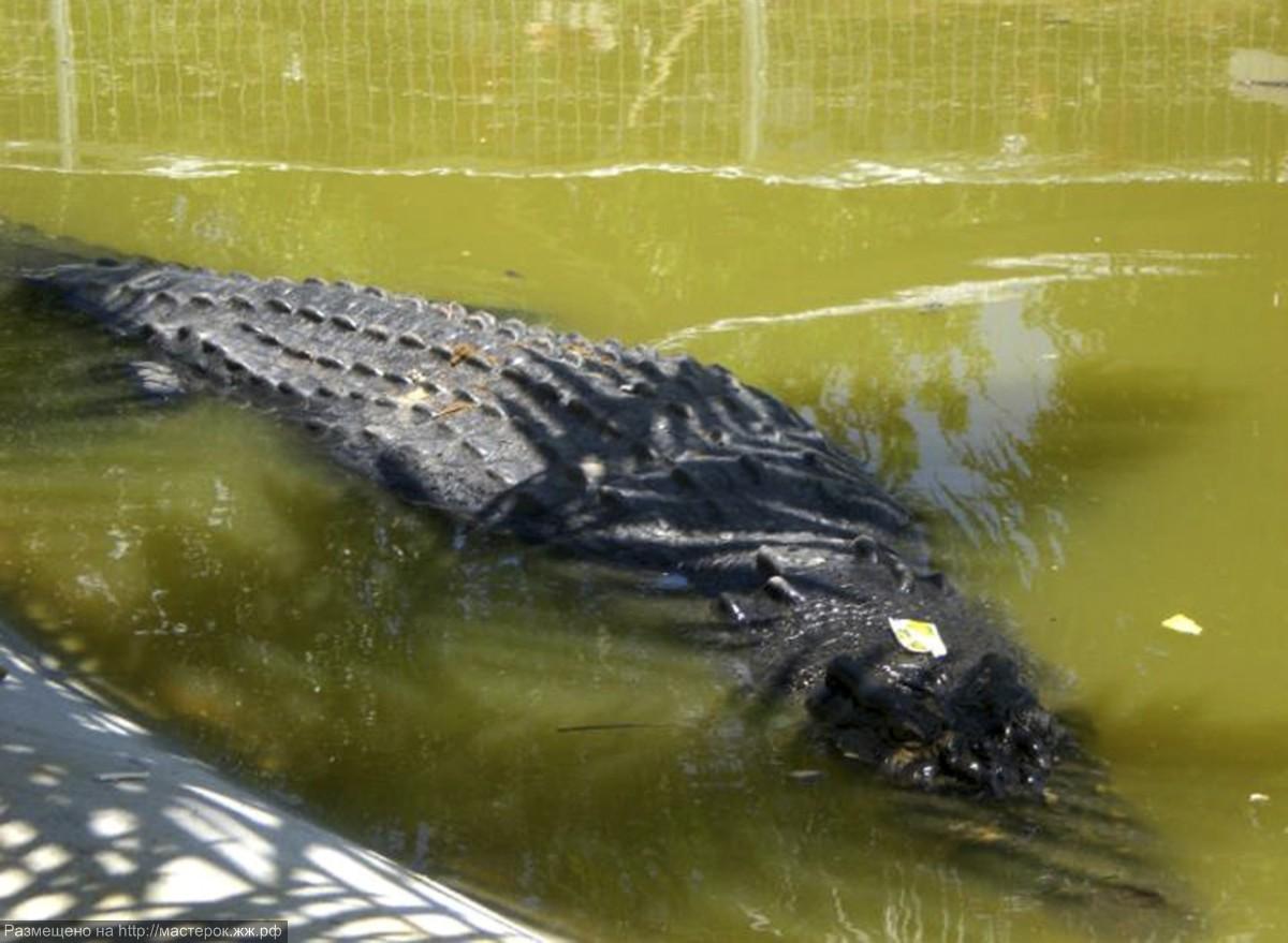 philippinen-krokodi_318955a (Копировать)