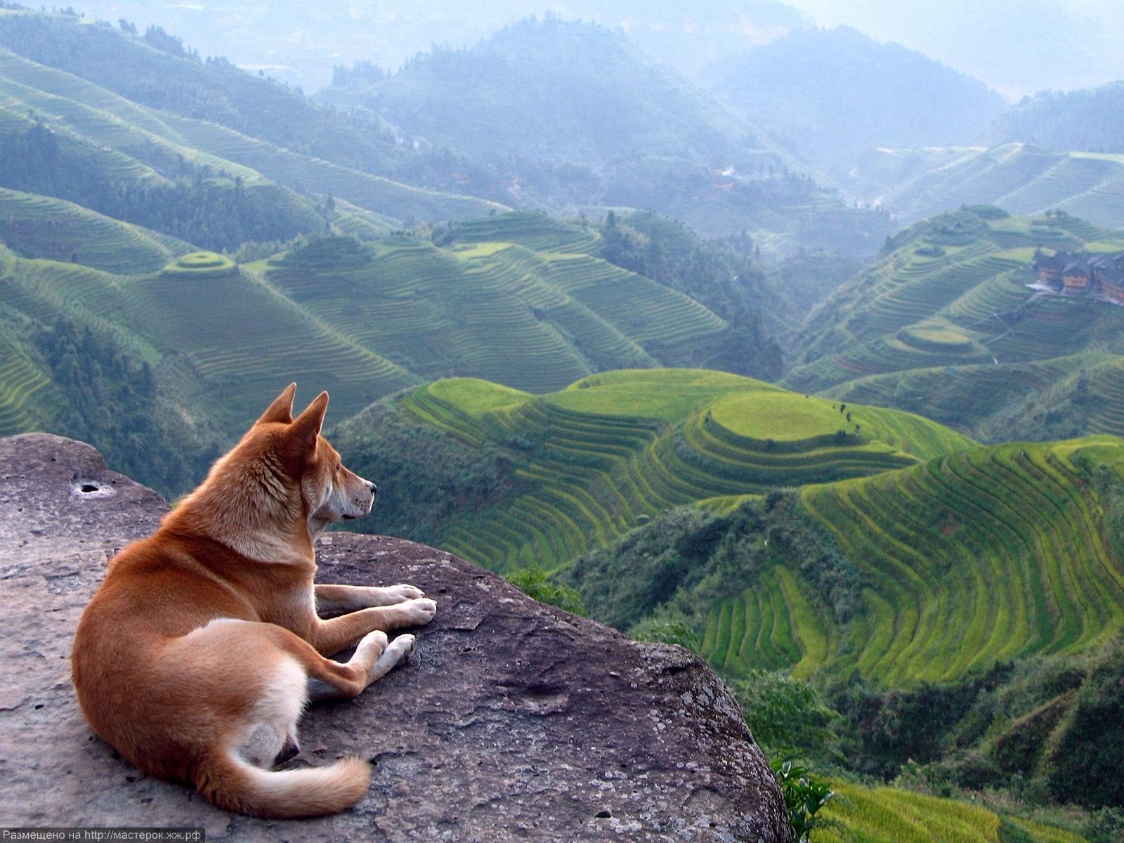 A Dog and a Beautiful Landscape (Копировать)