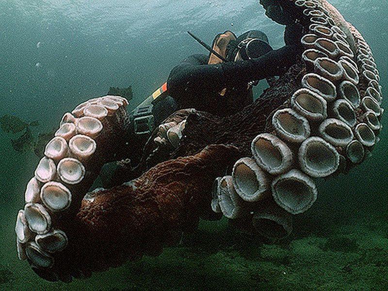Убить осьминога - это спорт?