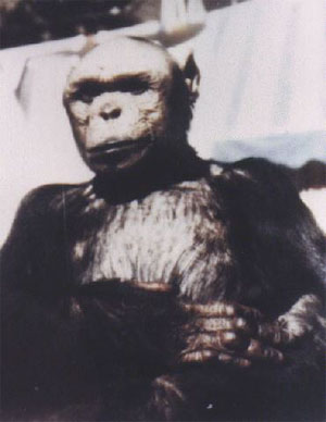 Люди похожие на обезьян фото