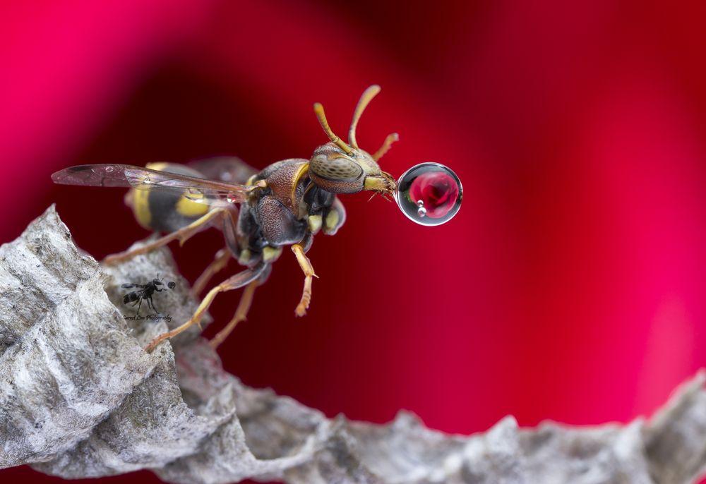 Зачем мухи пускают пузыри?